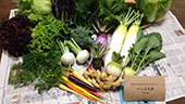 やさし菜農園野菜